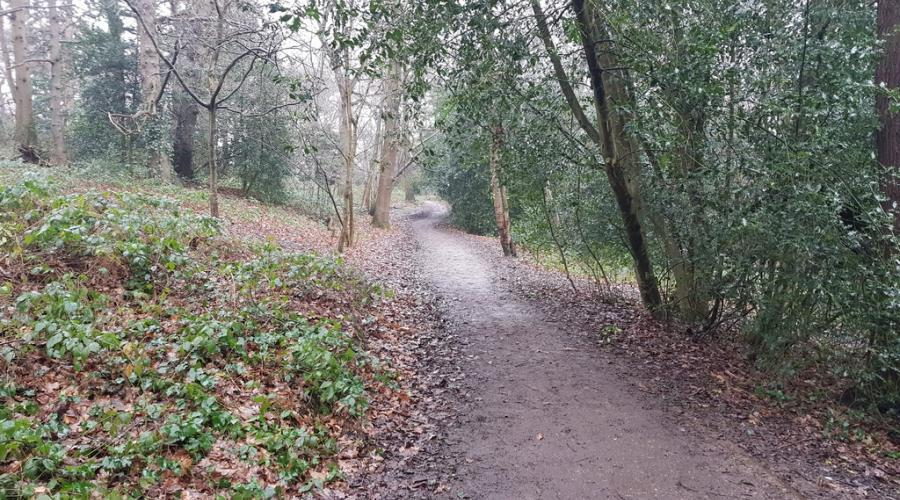 Oxleas Wood Trail