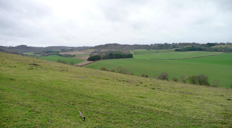 Crundale Downs
