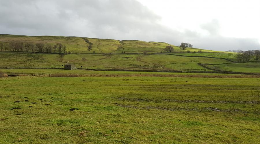 Farmland between Hawes and Burtersett