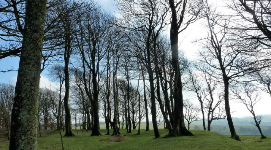 Trees on Chanctonbuty Ring