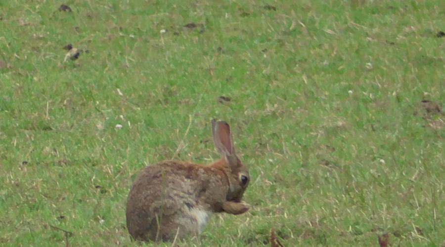 hare, kent