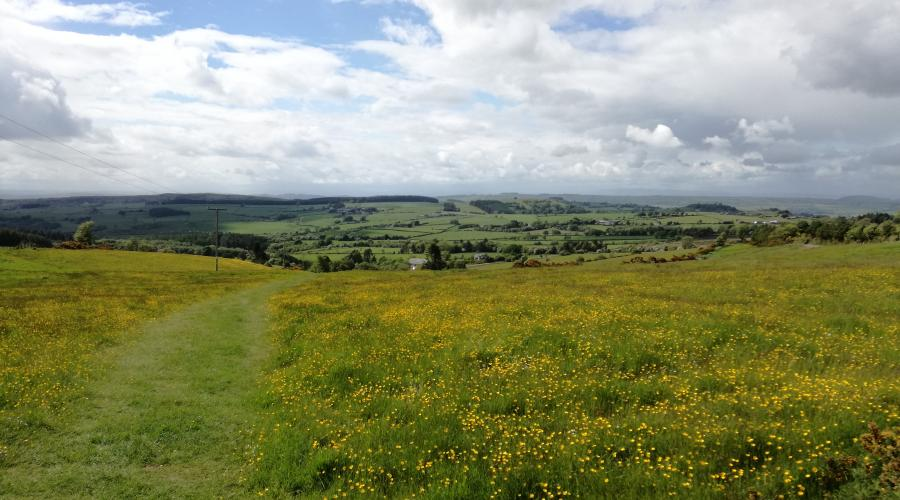 A yellow meadow in the Stiperstones