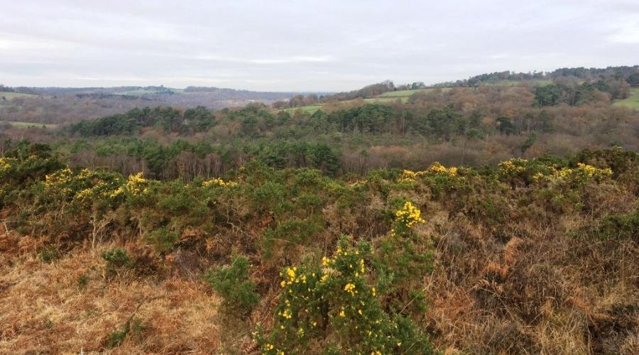 Ashdown heathland