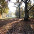 Long shadows on Chorleywood Common