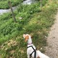 dog looking at river side