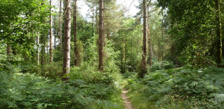 Alice_Holt_Forest_Track.jpg