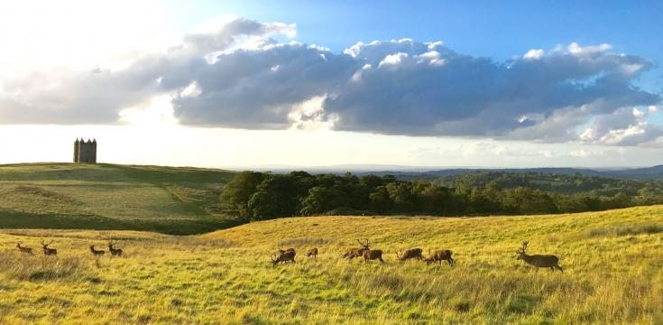Lyme Park, Deer and The Cage
