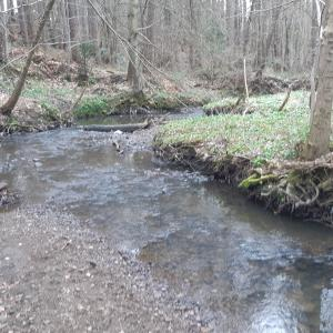River winding through woodland